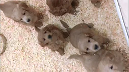 puppy-vid-thumb04