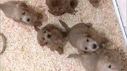 puppy-vid-thumb04